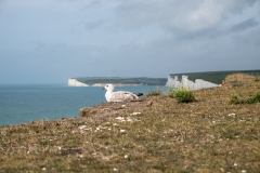Birling Gap and the Seven Sisters-7207
