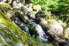 Dartmoor Becky Falls-8868